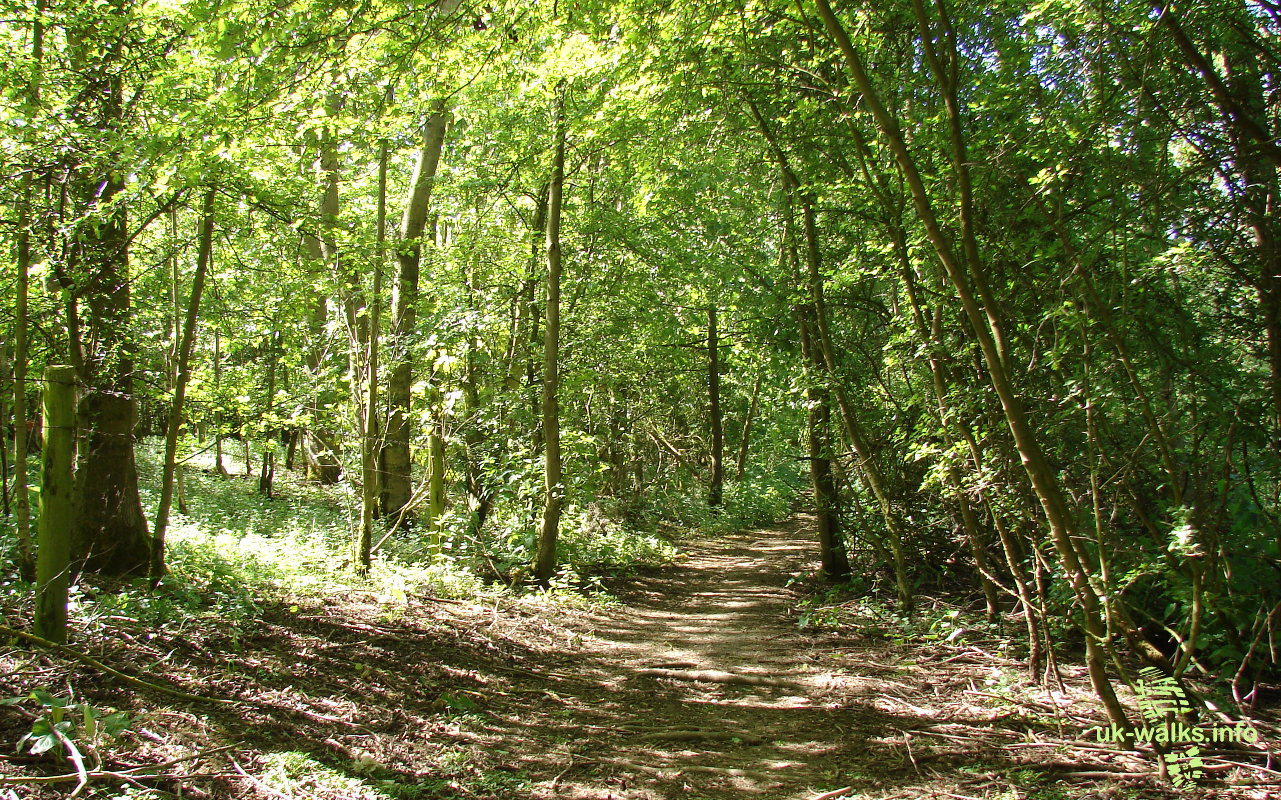 woodland by rutland water in may 2011